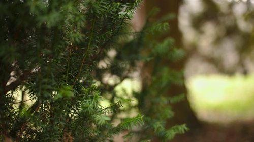 Strauch und Baum | Naturfreundehaus Billtalhöhe | Waldgaststätte | Königstein im Taunus