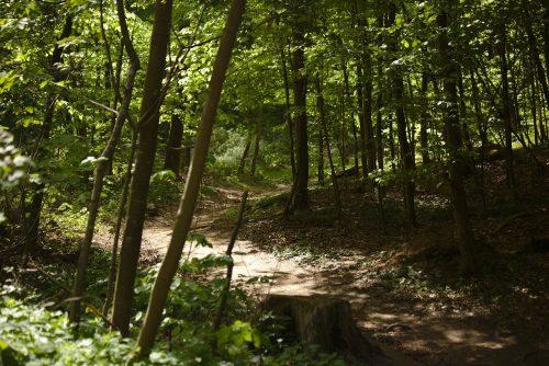 Waldweg | Naturfreundehaus Billtalhöhe | Waldgaststätte | Königstein im Taunus