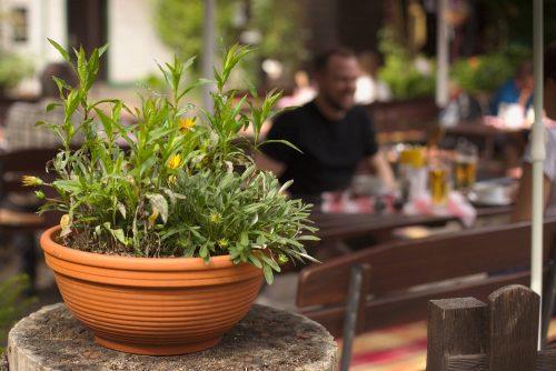 Pflanze | Naturfreundehaus Billtalhöhe | Waldgaststätte | Königstein im Taunus