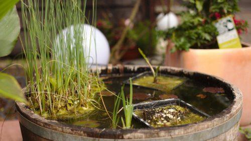 Pflanzen | Naturfreundehaus Billtalhöhe | Waldgaststätte | Königstein im Taunus