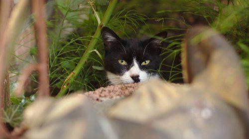 Katze | Naturfreundehaus Billtalhöhe | Waldgaststätte | Königstein im Taunus