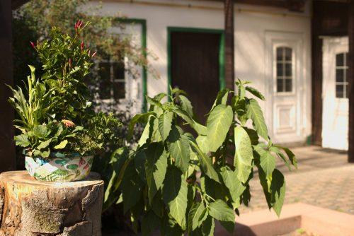 Hof und Pflanzen | Naturfreundehaus Billtalhöhe | Waldgaststätte | Königstein im Taunus