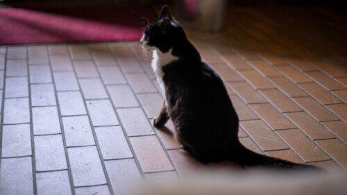 Unsere Katze im Eingang des Naturfreundehauses
