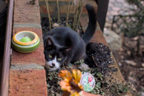 Unsere Katze im Naturfreundehaus