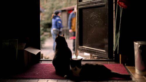 Katzen im Naturfreundehaus